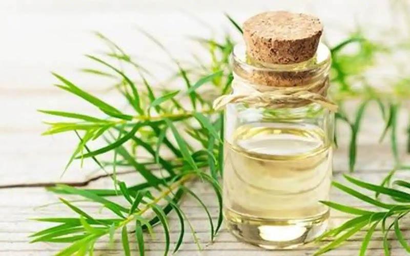خاصیت روغن درخت چای برای جوش
